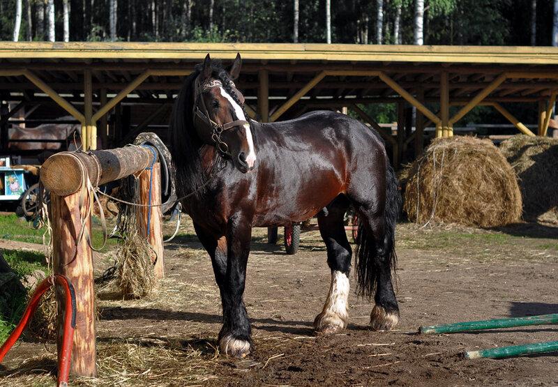 В гости к умнейшим лошадям